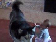 Dog Imitates Baby