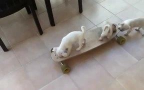Puppies Skateboarding