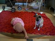 Dog Teaching Baby