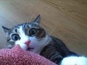 Epic Scared Cat
