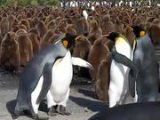 Penguin Slap Fest