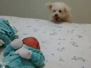 Dog Sees Baby