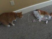 Cat Vs Cat Balloon
