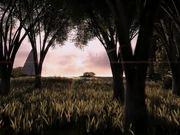 Animated Walk - Woods To