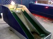 Baby Ducklings Playing On A Waterslide