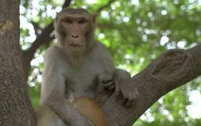 Monkey Holding Cat in a Tree