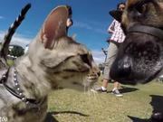 Cat Meets 50 Dogs At Dog Show