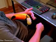 A Toucan Is Like A Lap Dog