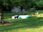Dog Runs Away With Pool