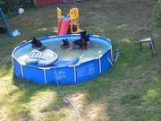 A Bear Pool Party