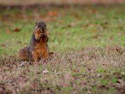Squirrel Explores and Eats