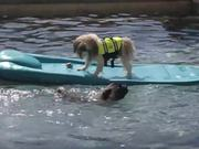 Heroic Dogs