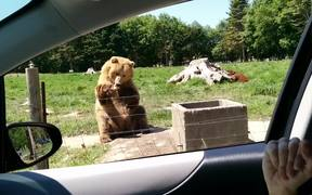 Bear Makes A Great Catch