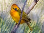 Weaver Bird Sitting on Branch