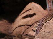 Snake Basking