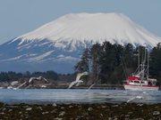 Fishing Boat Scaring Gulls
