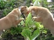 Cabbage Patch Puppies