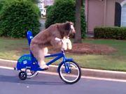 Dog Riding A Bike By Himself