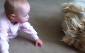 Baby Taking Bone From Golden Retriever