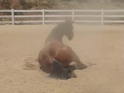Horse Passing Some Gas