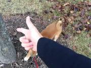 Spread Em Dog