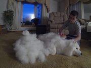 A Lot Of Fur