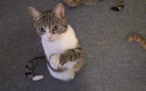 Cute Cat Begging For Treats