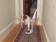 Ultimate Dog Shaming