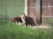 Cute Animals Compilation