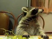 Cute Animals Eating Supercut