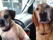 Dogs Sharing Ice Cream