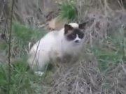 Cat Hairball Techno