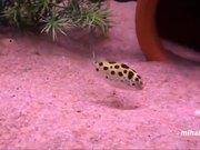 Animals Chasing Laser Pointers