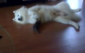 Dog And Kitten Playtime