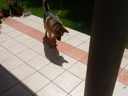 Dog Vs Shadow
