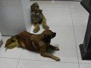 Dog Guards Water Bowl