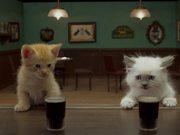 Jake O'Connor's: A Kitten Walks into a Bar - Yarn