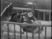 Pet Evaporated Milk (1955)
