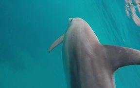 Dolphins of Ponta
