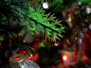 Christmas Tree and Ornaments
