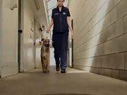 SPCA/MINI Video: Can You Teach a Dog to Drive?