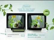 Heinz Campaign: Talk to The Plant