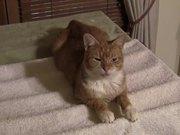 The Talkative Cat