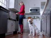 The Shelter Pet Project Video: I Know
