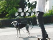 Hesh Puppy