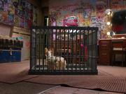 Pup Star: Better 2Gether Trailer