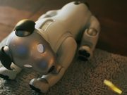 Sony Revives Aaibo the Robot Dog