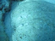 Fish on the Sea Bottom