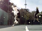 Jungle Video: Fetch