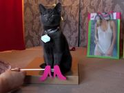 Poopy Cat Dolls Video: Do You Want My Purr Purr?